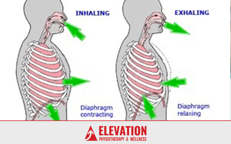 ELEVATION-Physiotherapy-diaphragmic breathing