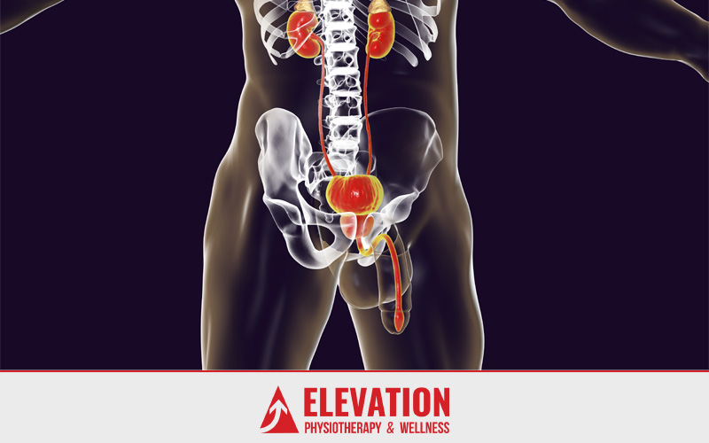 Elevation-Physio-The-Prostate-Of-Affairs